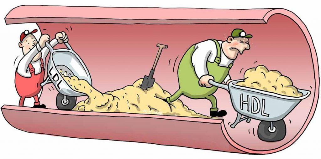Nguyên nhân dẫn đến cholesterol cao - cách phòng tránh